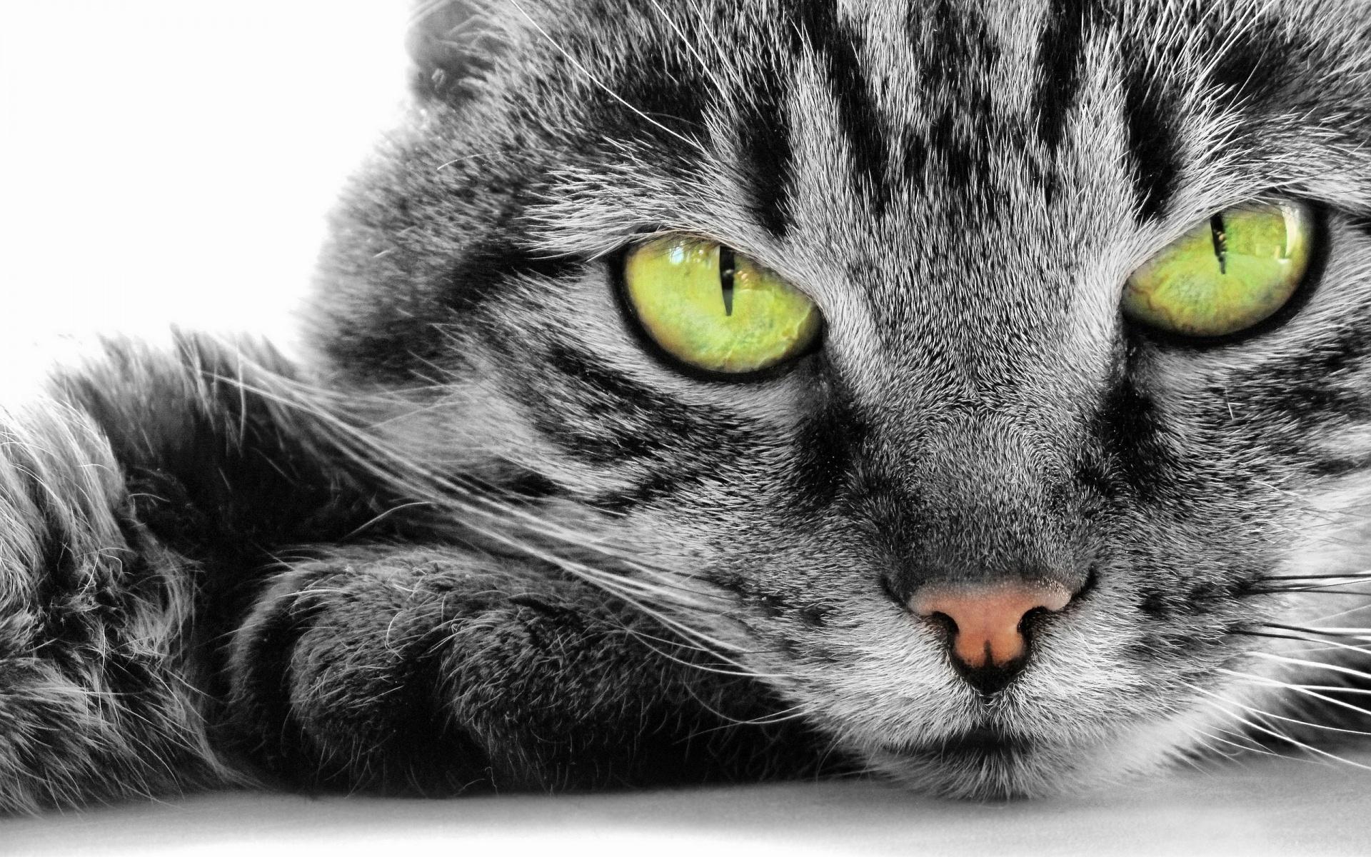 Green-Eye-Cat-1920x1200
