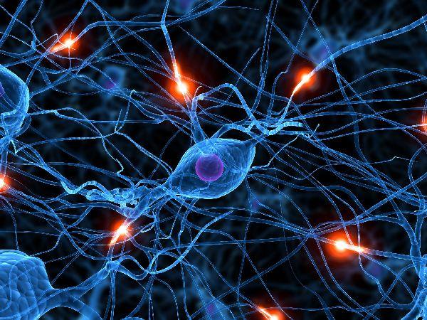 Nuestro otro cerebro