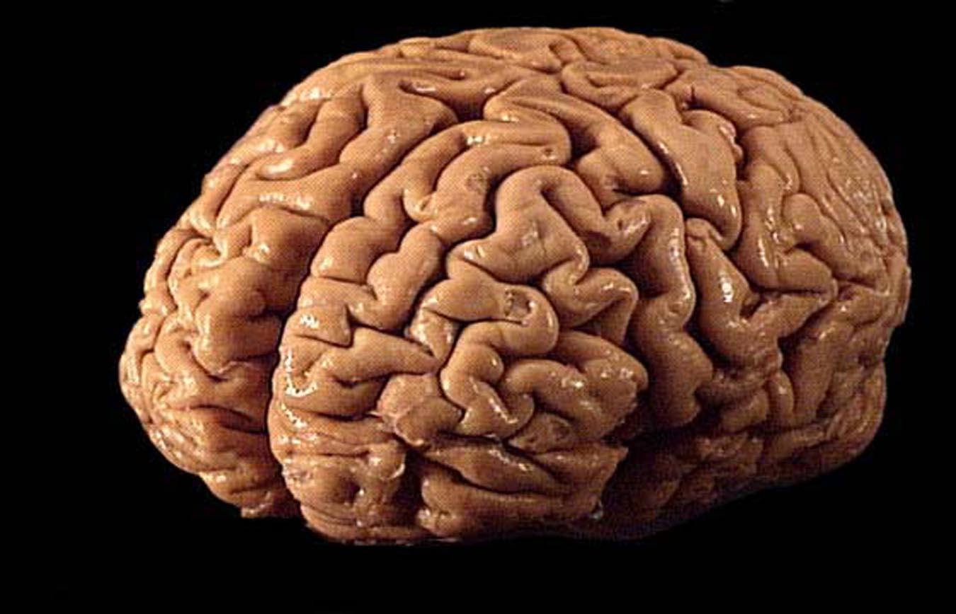 Los escultores del cerebro, charla de Mara Diersen