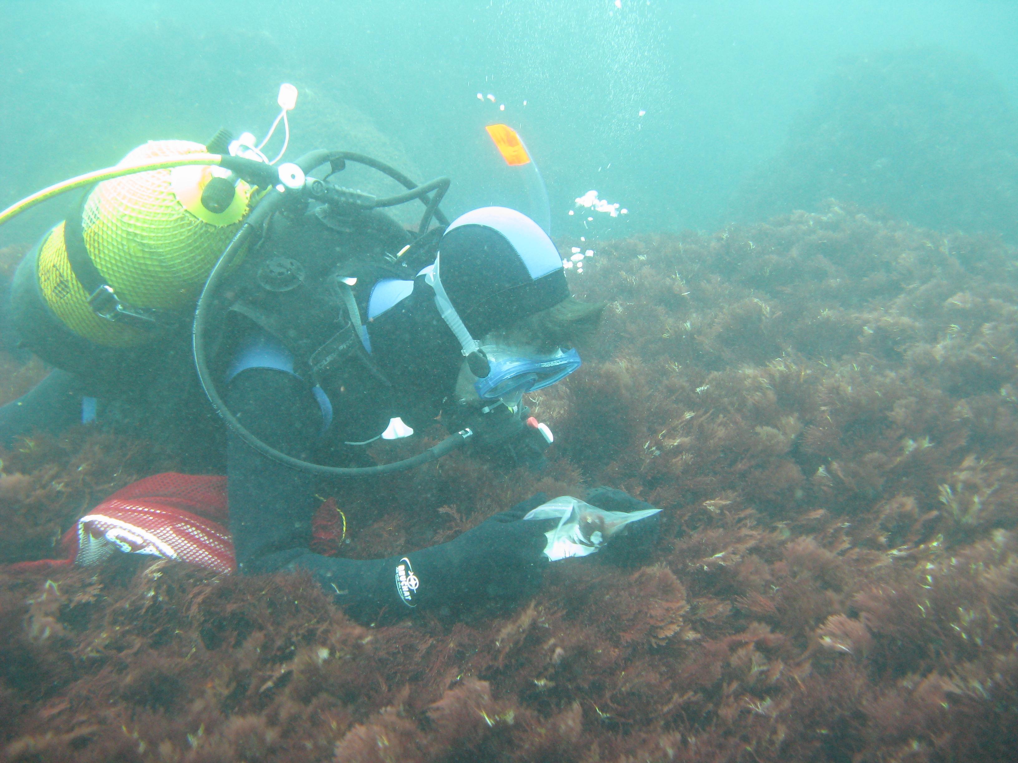 Cuando las algas rojas no pueden gestionar los radicales libres