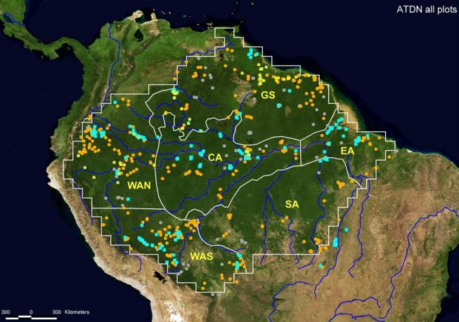 Especies hiperdominantes: los árboles que más abundan en el Amazonas