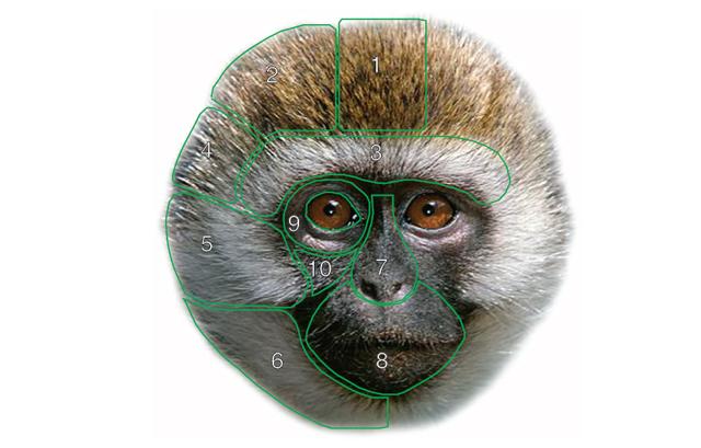 El libro de las caras de los monos