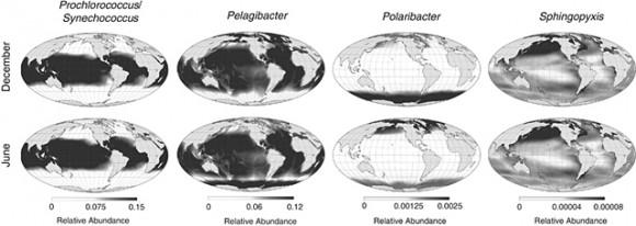 Mapa de distribución global de bacterias según el género. Imagen: Ladau et al. (2013)