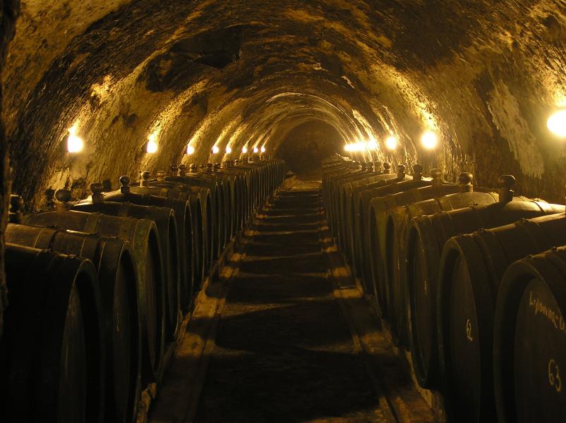 La podredumbre noble: Cuando una infección mejora un vino