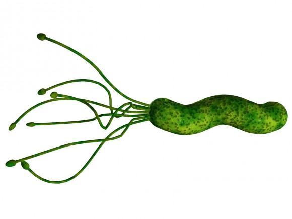 Imagen 1. Aspecto de la bacteria H. pylori