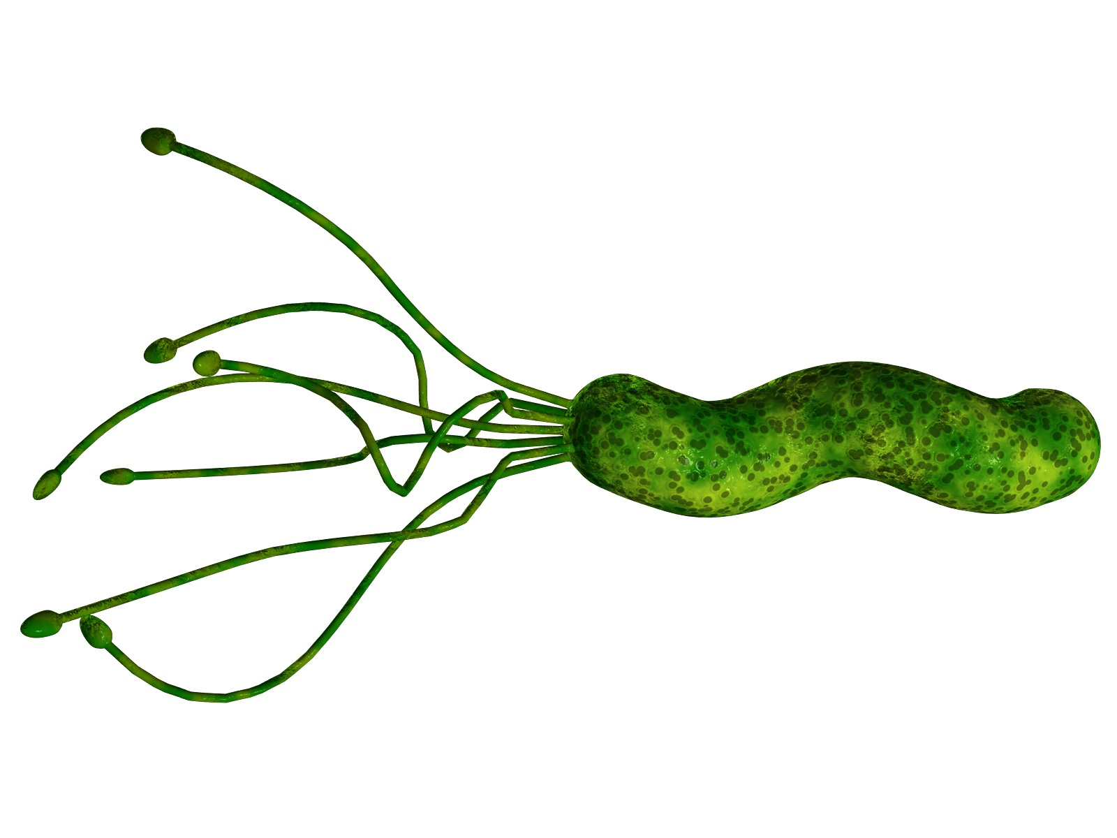 La bacteria que llegó a América antes que Colón