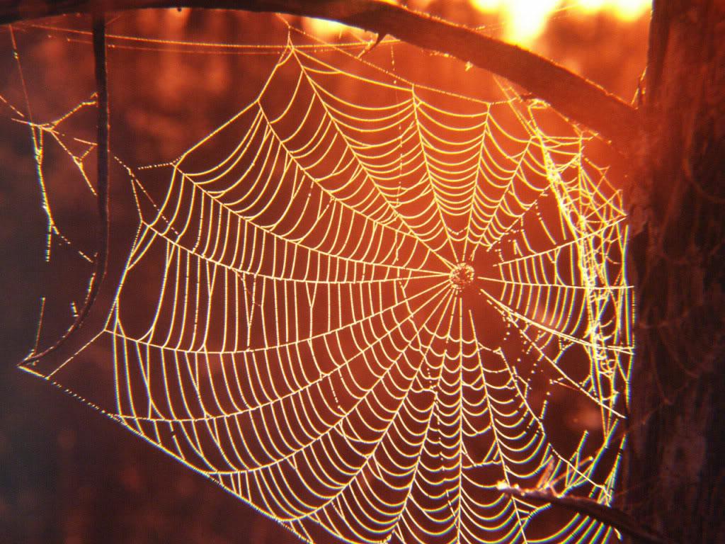 La espectacular conductividad térmica de las telarañas…que no lo era