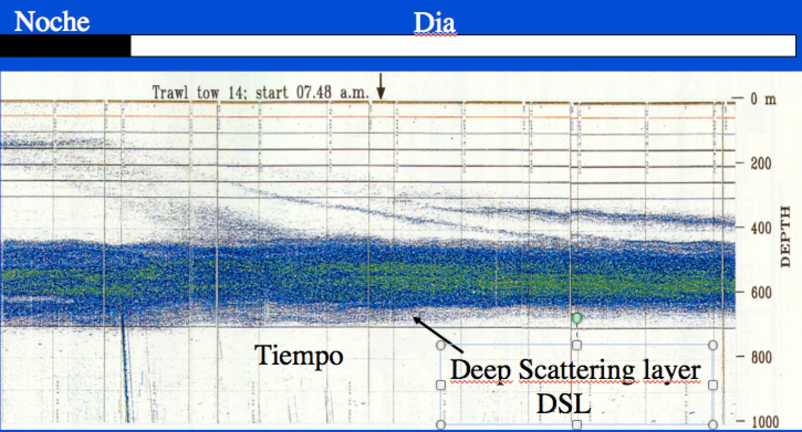 Imagen por ultrasonidos que muestra como los peces mesopelágicos regresan a la base de la capa de dispersión profunda del Atlántico subtropical, (los puntos bajando en diagonal) a algo más de 400 metros de profundidad, a medida que la luz solar avanza hacia su posición en superficie. Imagen cortesía del profesor Santiago Hernández-León, Universidad de Las Palmas de Gran Canaria.