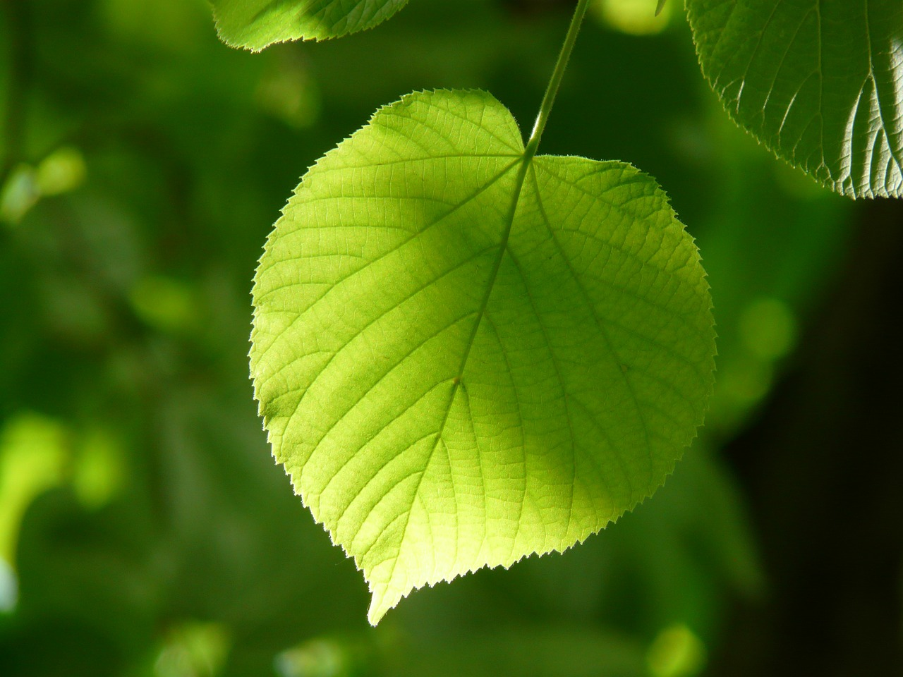De la fotosíntesis