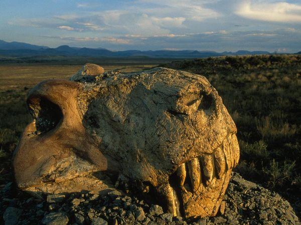 De las extinciones