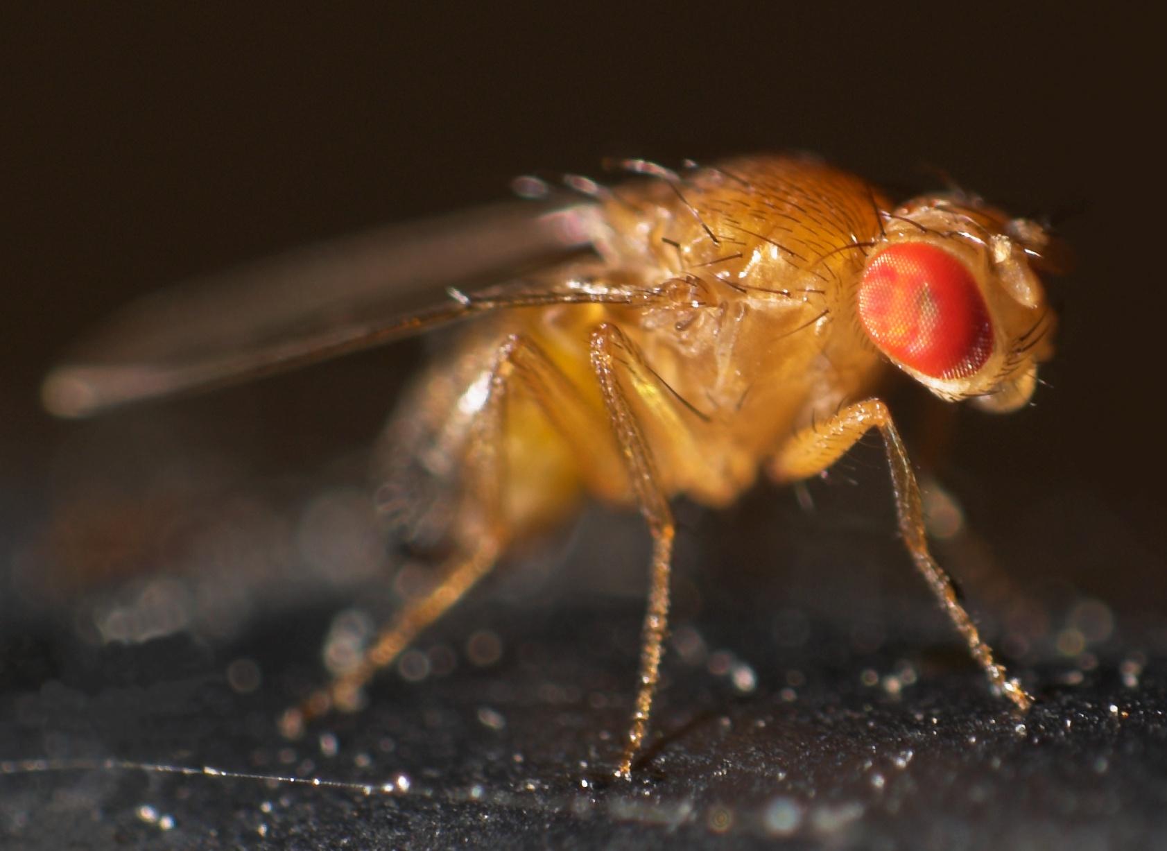 La inevitable ciencia de los bichos raros