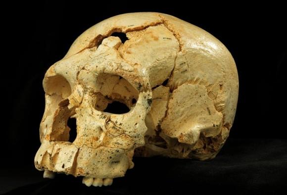 Cráneo 17 descubierto en la Sima de los Huesos, Atapuerca. Foto: Javier Trueba-Madrid Scientific Films.