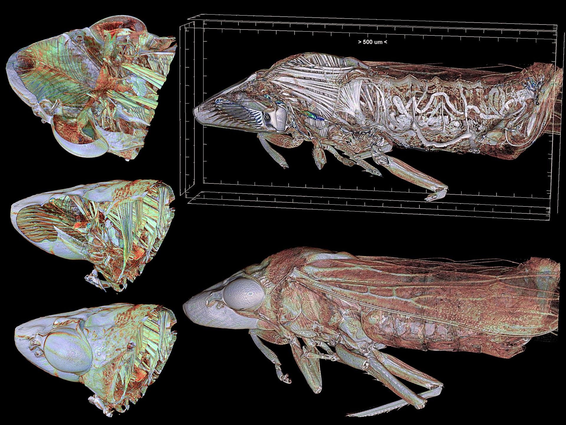 Arte y ciencia en el interior de un insecto