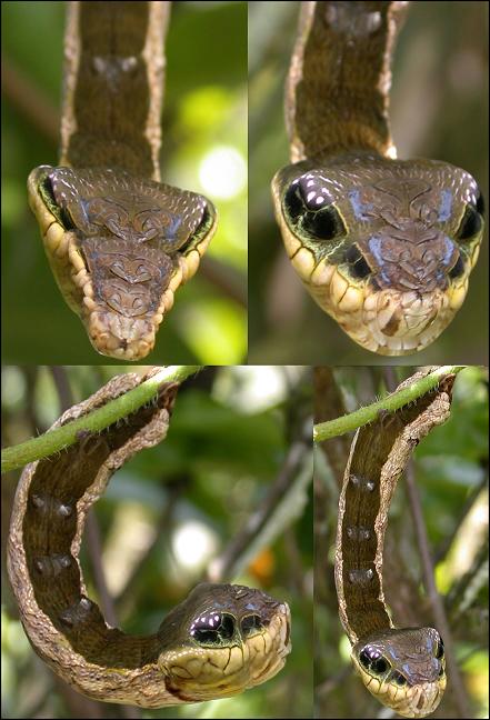 Cualquiera se acerca a esa serpient… no, espera.