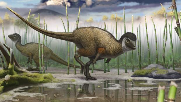 Las plumas estaban en los dinosaurios desde el principio