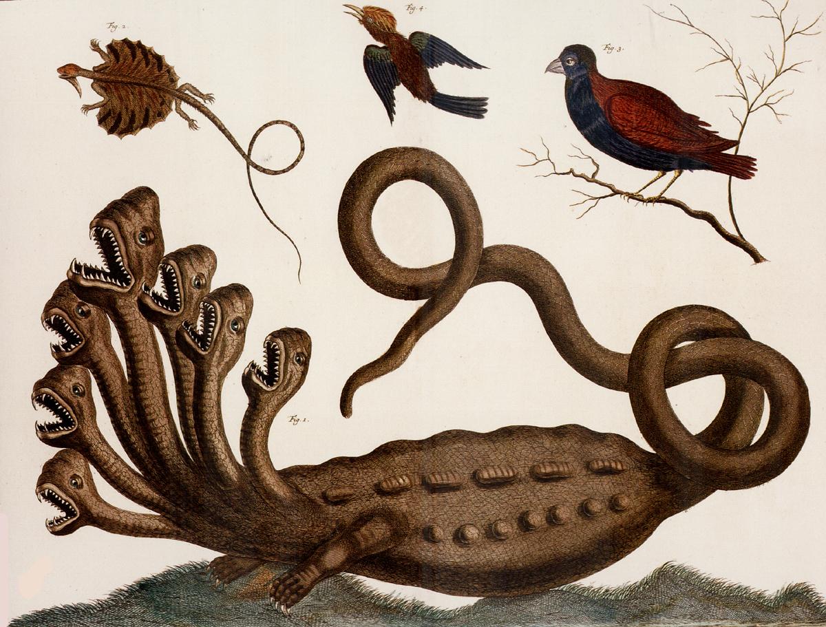 Ilustración de la Hydra en Locupletissimi Rerum Naturalium Thesauri de Albertus Seba (1734), y que Linneo descarta como posible en su Paradoxa del Systema naturae (1735)