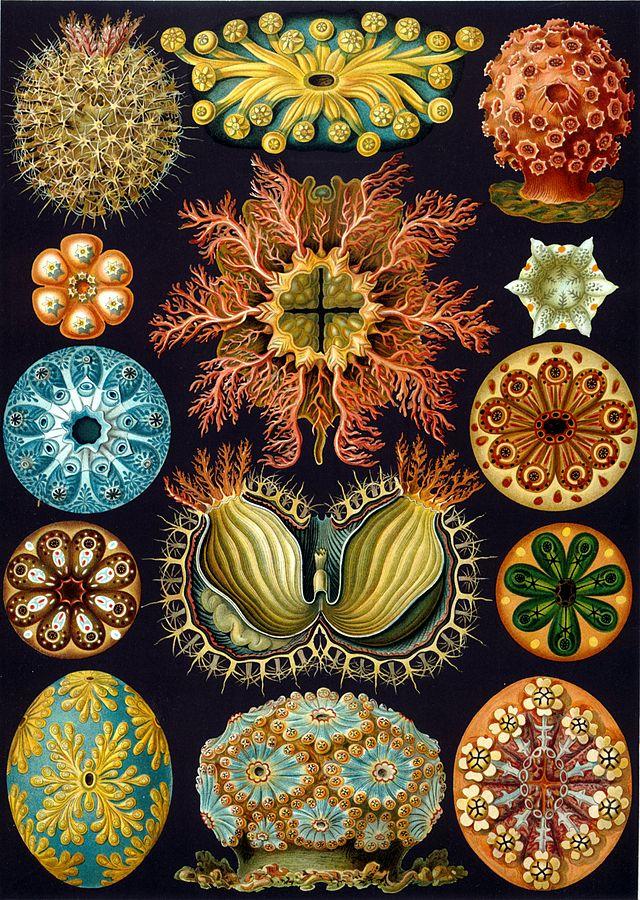 De los organismos
