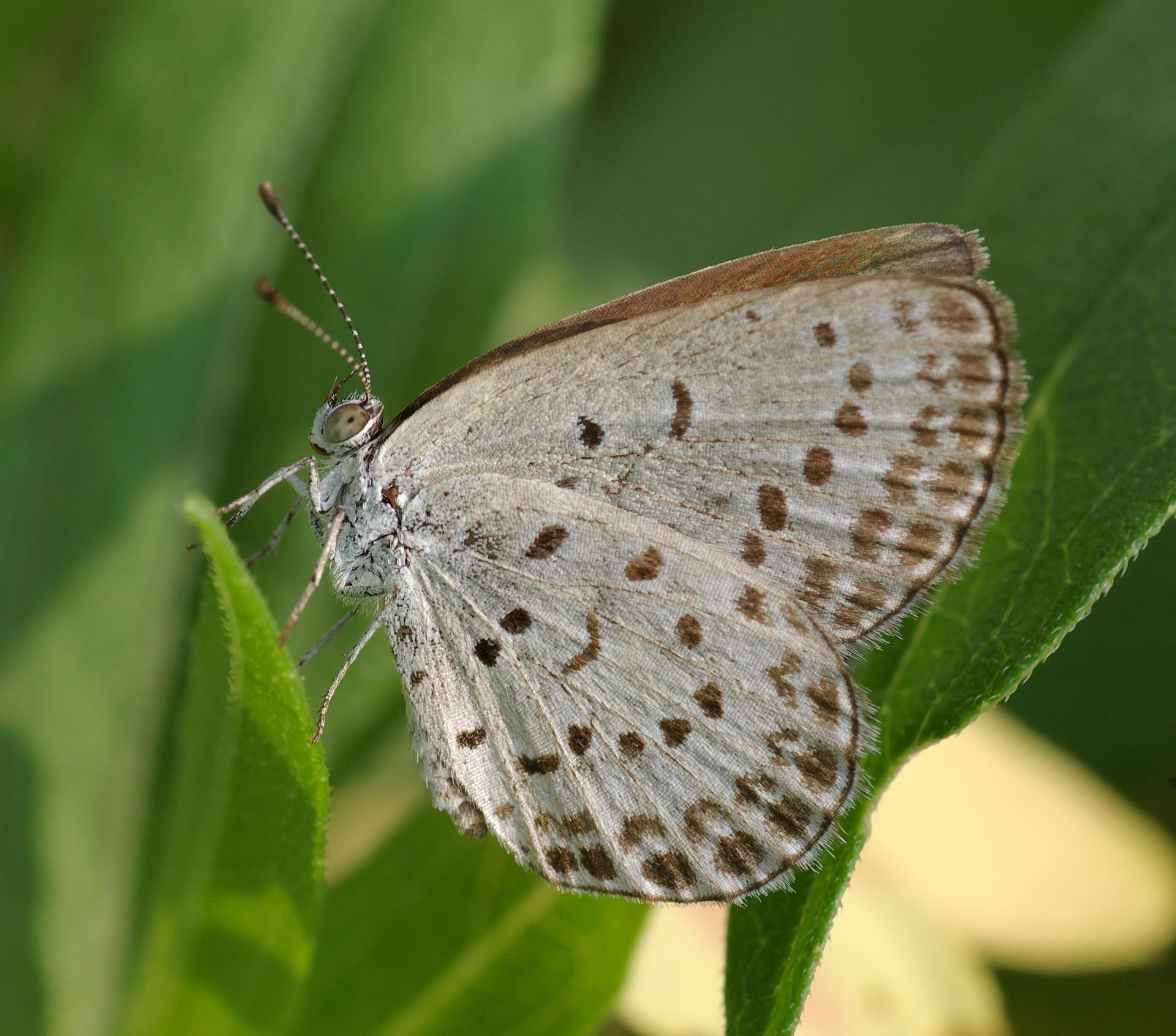 Las mariposas de Fukushima