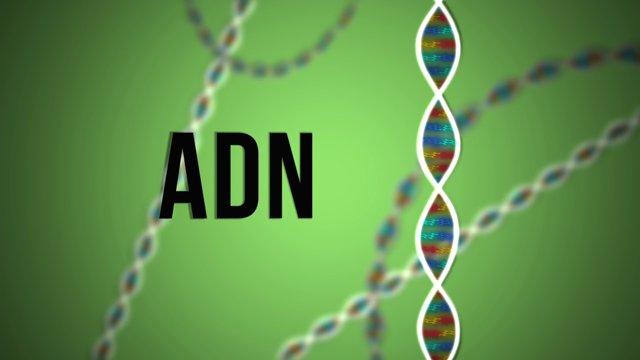Ciencia Express: ADN