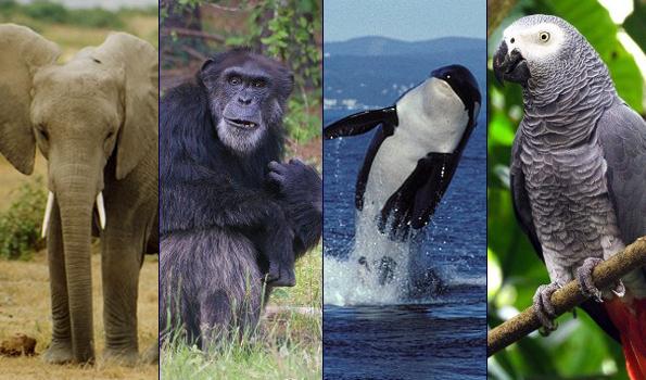 El dilema moral de elevar especies