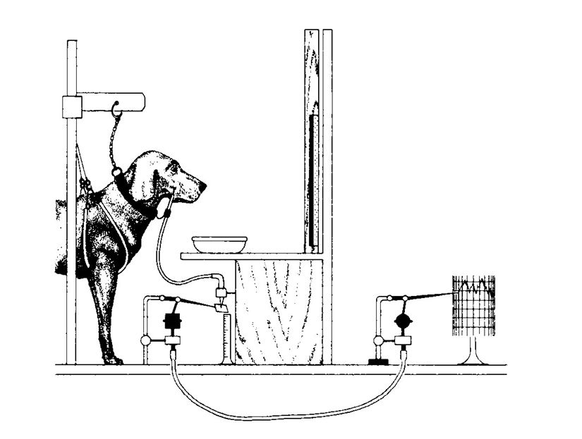 Las drogas, el café, y el perro de Pavlov
