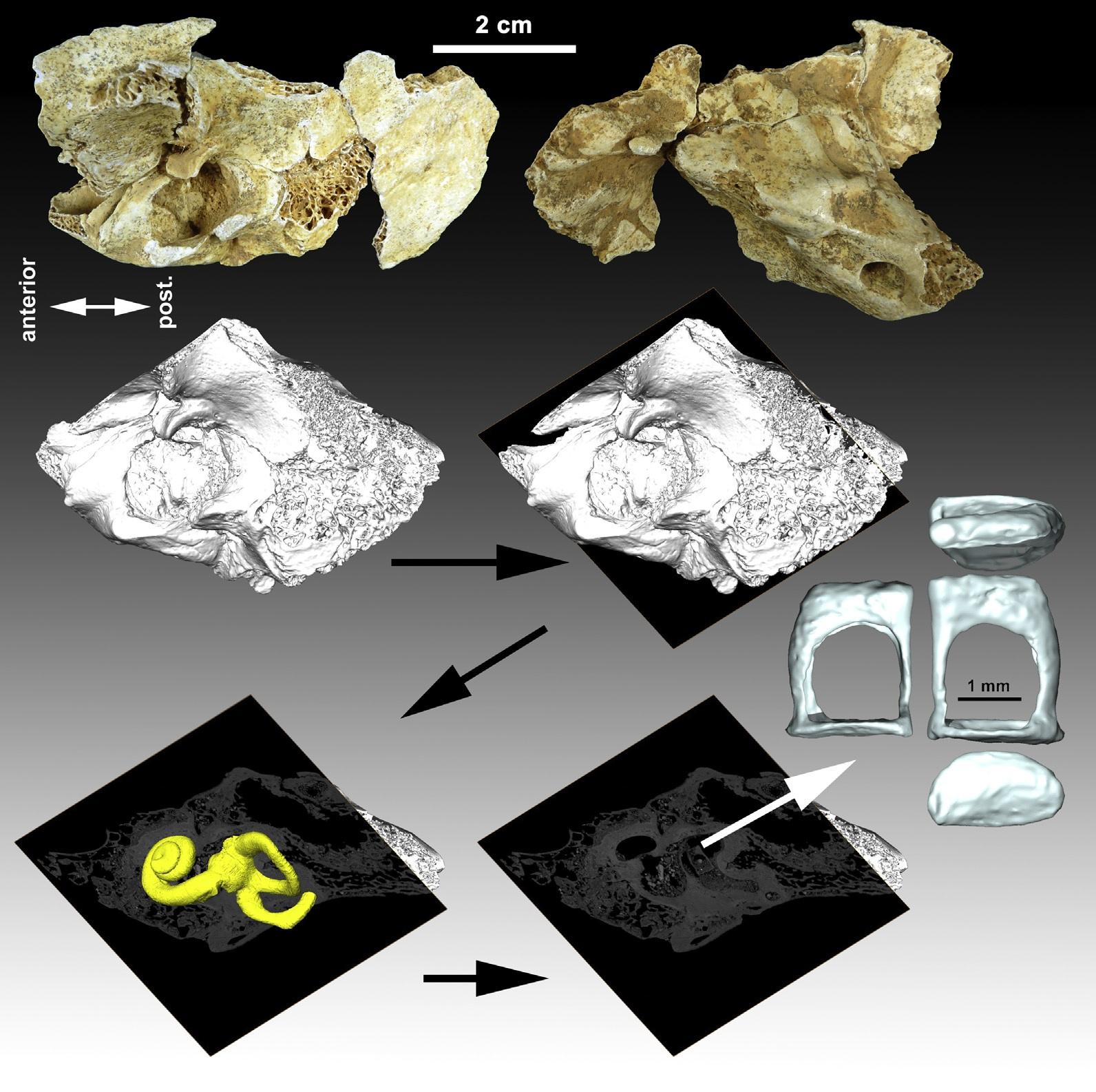 El estribo más completo del registro neandertal