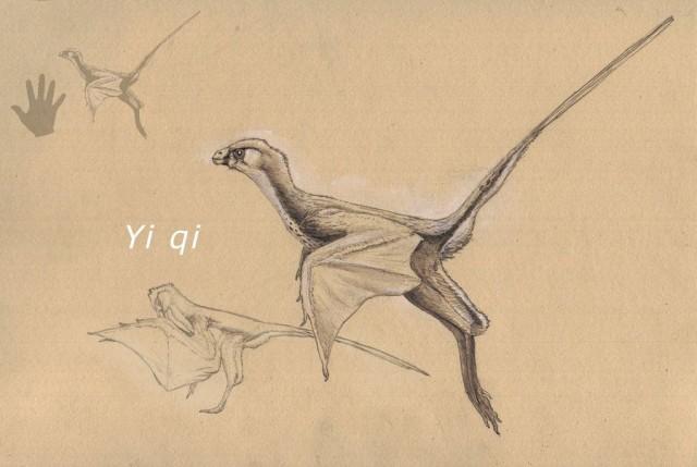 Yi qi by Hyrotrioskjan (Devianart)