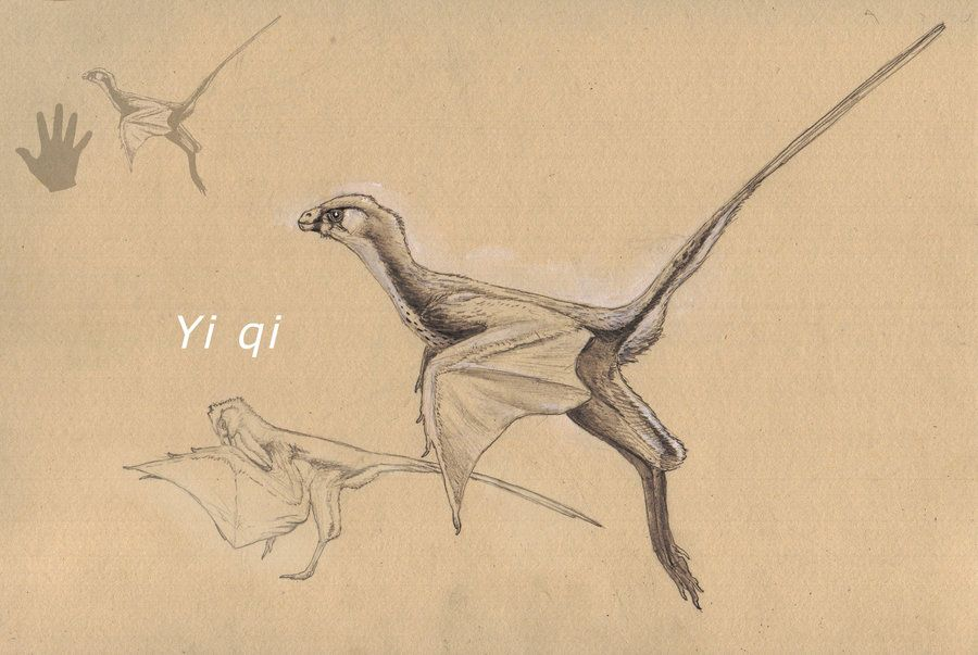 Dinosaurio con alas de murciélago: FAQ