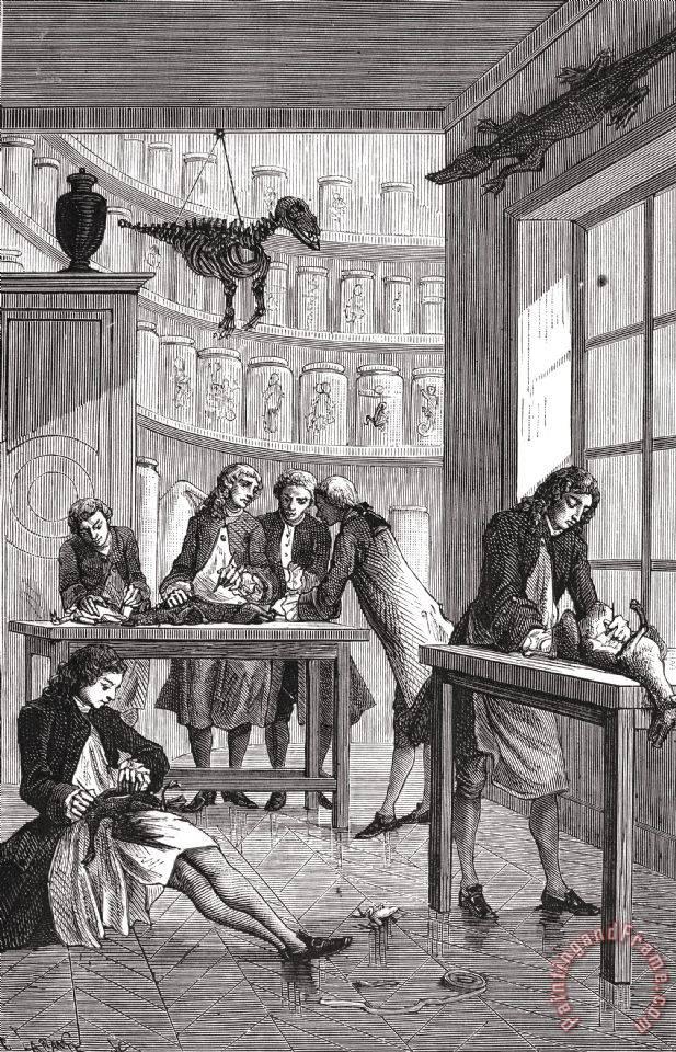 Experimentación animal (I)
