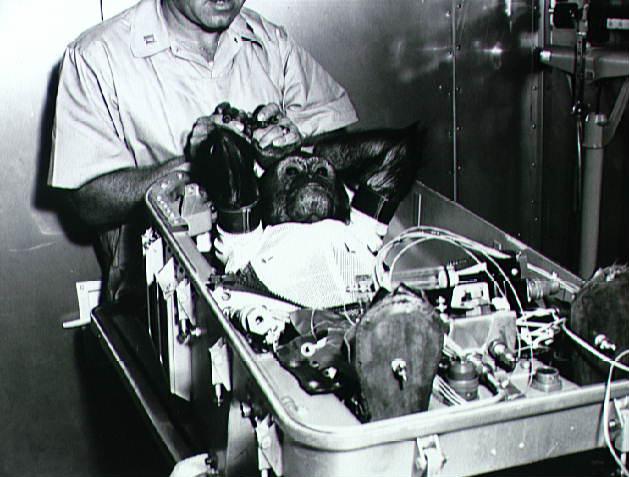 Experimentación animal (y III)