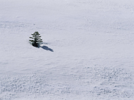 marc-moritsch-a-lone-pine-tree-casts-a-shadow-on-a-snow-field