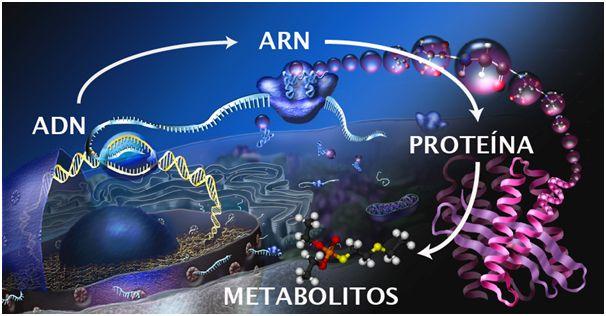 Próxima estación: metabolómica