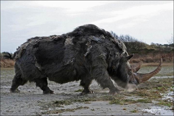 Cuando por Bizkaia corrían rinocerontes