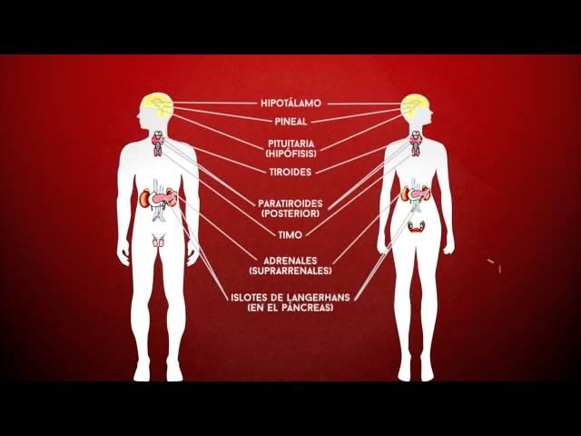 Ciencia express: Qué son las hormonas