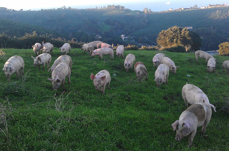 Del cerdo, hasta la hidroxiapatita