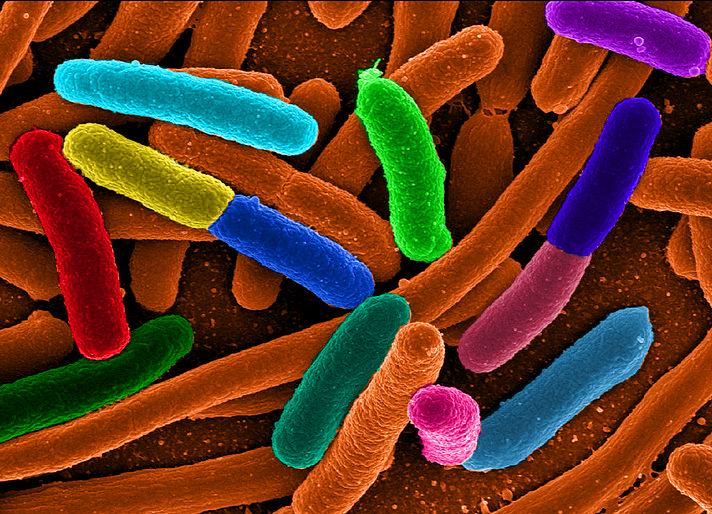 Un método para la determinación rápida de especies bacterianas por su código de barras