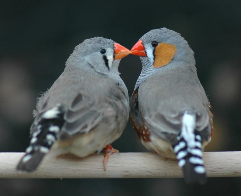 Los réditos del amor