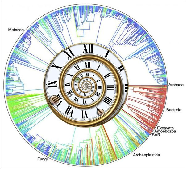 Relojes de ADN por Guillermo Peris