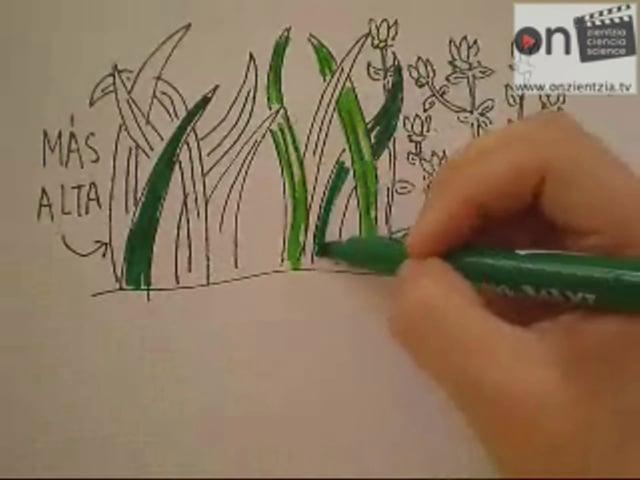 OnZientzia: La extinción de la mariposa hormiguera