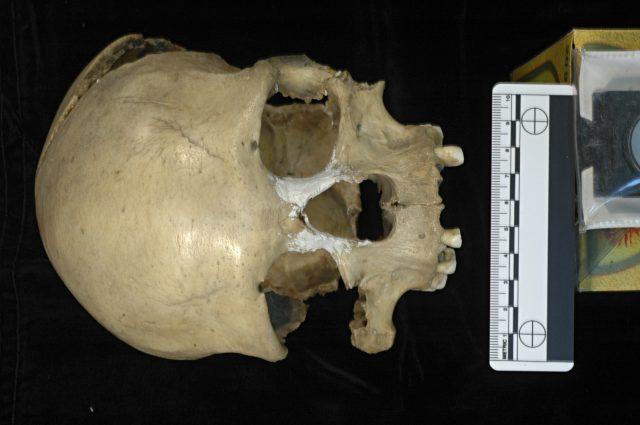 El cráneo de la mujer de Pestera Muierii (Rumania) de 35.000 años de antigüedad de quien se ha secuenciado el genoma mitocondrial completo (Foto cortesía de E. Trinkaus y A. Soficaru)