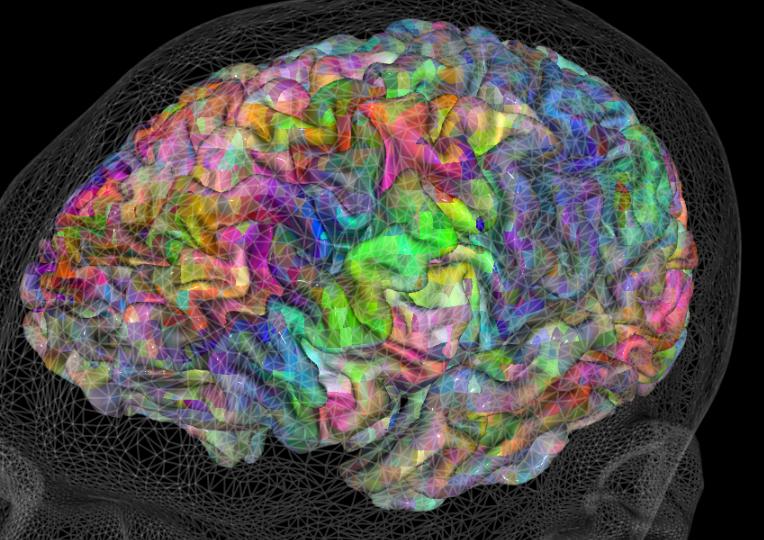 Hablemos del cerebro