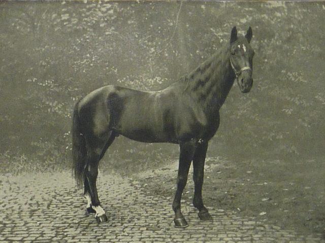 Hans_1910