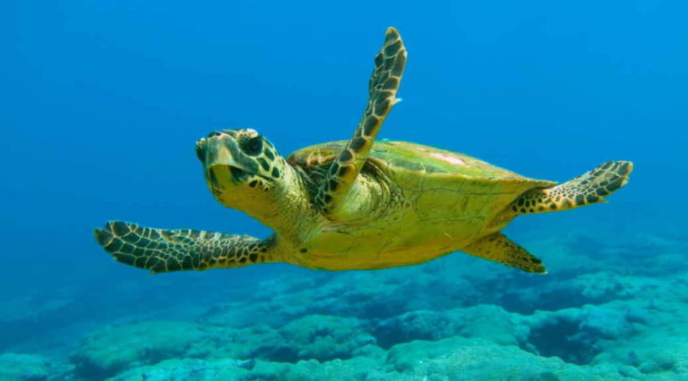 Salvando a las tortugas marinas