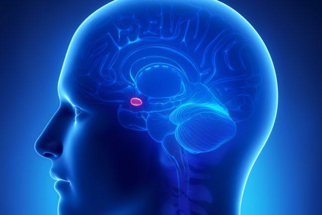 Localización de la amígdala