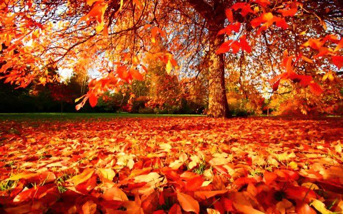 La forma de las hojas