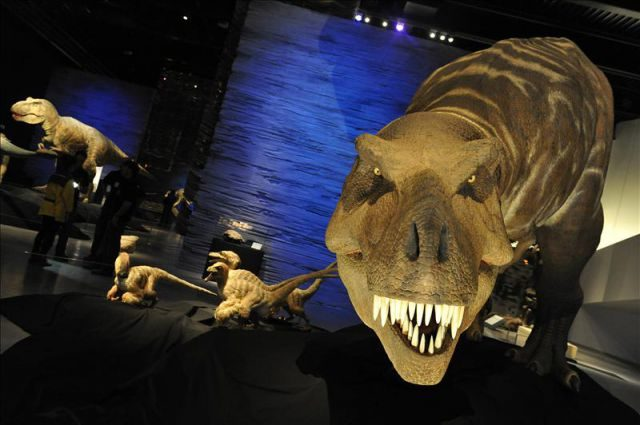 """Imagen de la exposición """"Tyrannosaurus rex"""", en el Parque de las Ciencias de Granada"""