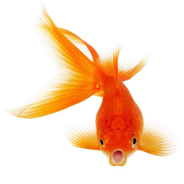 peces-en-el-rio