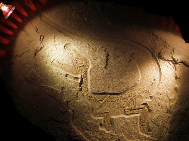 Sciurumimus. Imagen de Ghedoghedo
