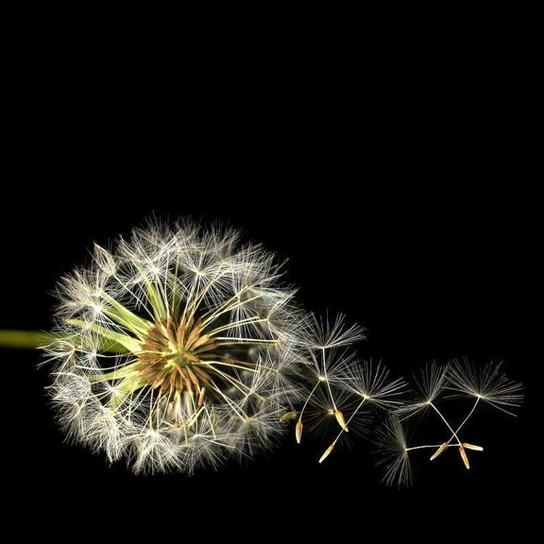 El sistema de la difusión social de la ciencia: Catalizadores del sistema y consideraciones finales