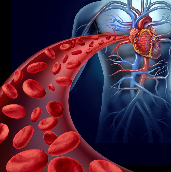 El flujo sanguíneo se reorganiza en respuesta a las necesidades